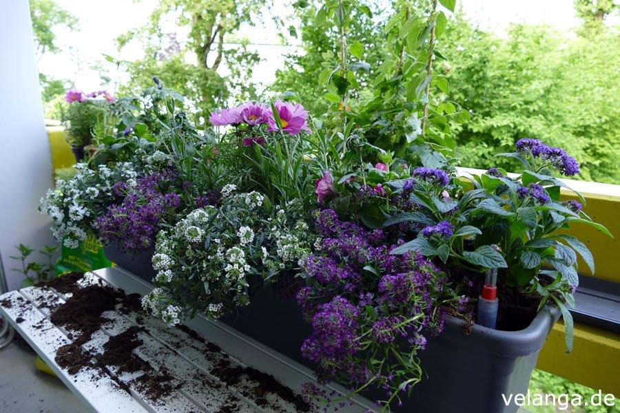 einen balkonkasten sommerlich und bienenfreundlich bepflanzen velanga. Black Bedroom Furniture Sets. Home Design Ideas