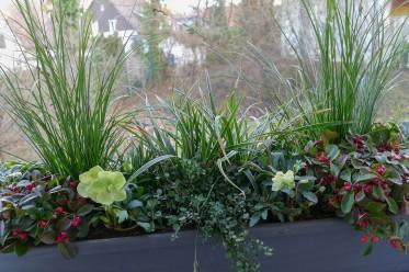 Velanga for Balkonkasten winterhart bepflanzen
