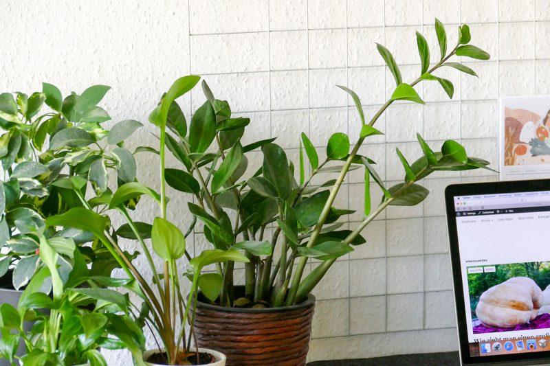 Wieviel Lux Brauchen Pflanzen