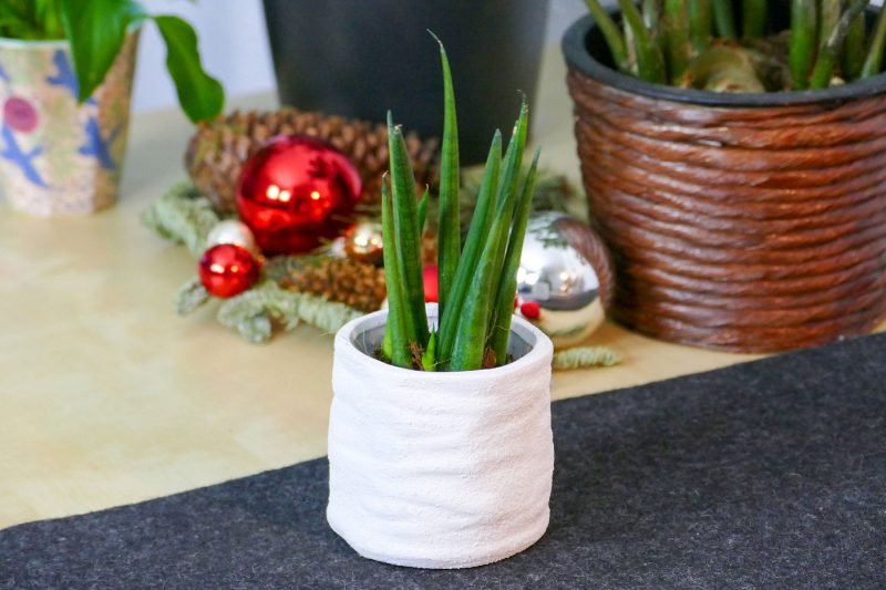 pflegeleichte pflanzen f r jugendliche an weihnachten velanga. Black Bedroom Furniture Sets. Home Design Ideas