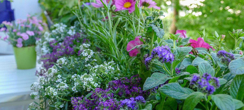 5 Bienenfreundliche Pflanzen Fur Den Balkon Velanga